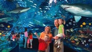 ripleys aquarium gatlinburg tn