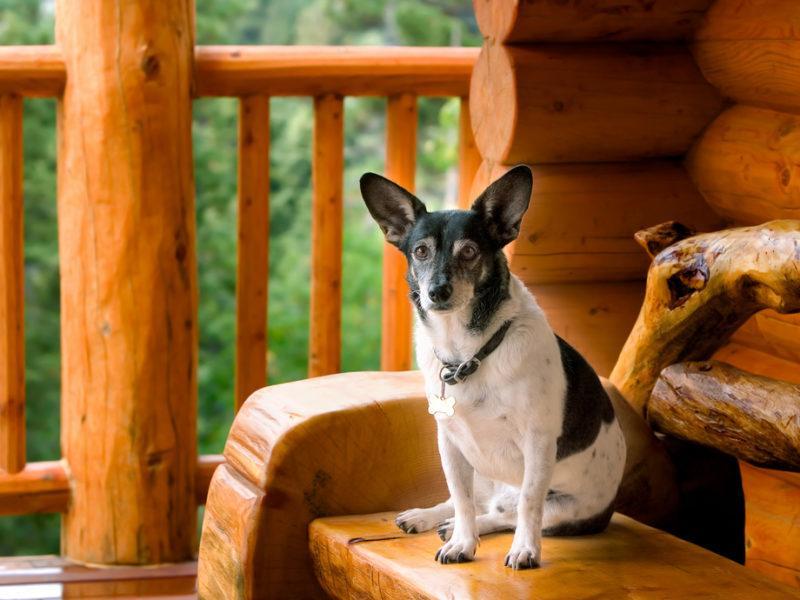 Dog on Gatlinburg cabin porch